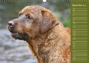 Labrador Retriever - Faithful Companions (Wall Calendar 2015 DIN