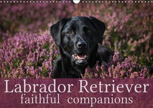 Labrador Retriever - Faithful Companions (Wall Calendar 2015 DIN