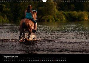 Pferdekalender (Wandkalender 2016 DIN A3 quer)