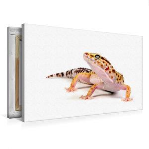 Premium Textil-Leinwand 75 cm x 50 cm quer Leopardgecko - Eublep