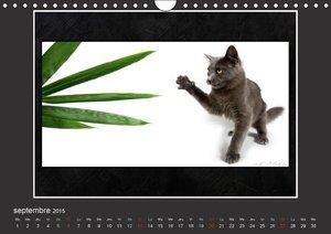 Quelles mimiques ces chatons (Calendrier mural 2015 DIN A4 horiz