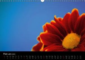 Up Close And Amazing (Wall Calendar 2015 DIN A3 Landscape)