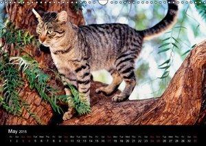 Cats (Wall Calendar 2015 DIN A3 Landscape)