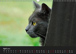 Seelen-Heiler auf Samtpfoten (Wandkalender 2019 DIN A3 quer)