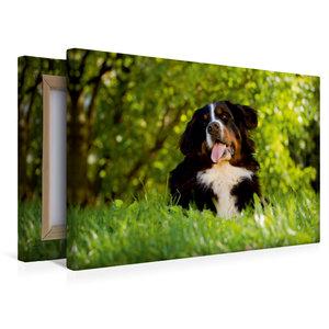 Premium Textil-Leinwand 45 cm x 30 cm quer Berner Sennenhund