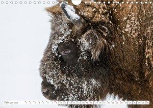 Tierische Profile (Wandkalender 2020 DIN A4 quer)