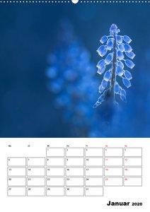 Blütentraum in Blau