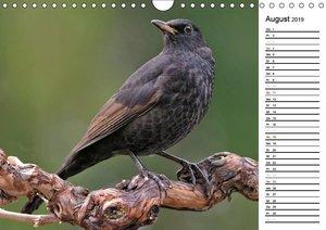 Heimische Gartenvögel (Wandkalender 2019 DIN A4 quer)
