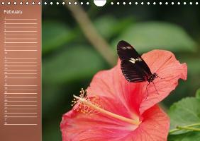 Delicate Beauties Hibiscus Flowers (Wall Calendar perpetual DIN - zum Schließen ins Bild klicken