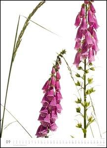 Flora 2020 - Blumen-Kalender von DUMONT- Foto-Kunst - Poster-For