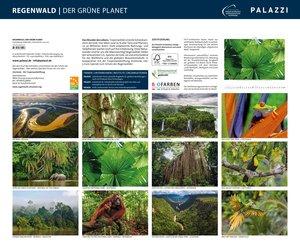 Regenwald 2019