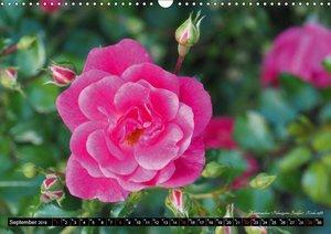 Die Namen der Rosen (Wandkalender 2019 DIN A3 quer)