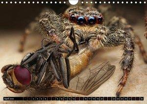 Faszination Makrofotografie: Spinnen (Wandkalender 2018 DIN A4 q