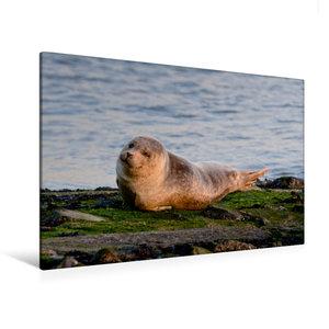 Premium Textil-Leinwand 120 cm x 80 cm quer Kleiner Seehund an d
