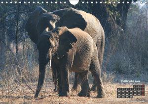 begegnungen - elefanten im südlichen afrika (Wandkalender 2019 D