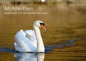 Am Alten Rhein - Lingenfelder Altrhein bei Germersheim