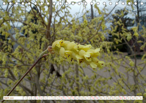 Ihr Auftritt...gelb !!! Gelbblühende Naturschönheiten