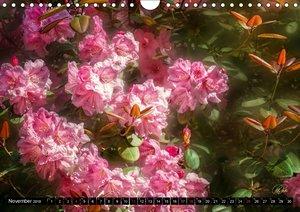 Rhododendren in der Parklandschaft Ammerland