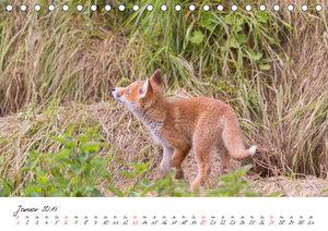 Fuchs entdeckt - im Naturparadies der Mecklenburgischen Seenplat