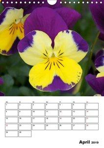 Frühlingserwachen (Wandkalender 2019 DIN A4 hoch)