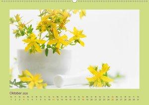 Helfende Kräuter aus dem Garten Schweizer KalendariumCH-Version
