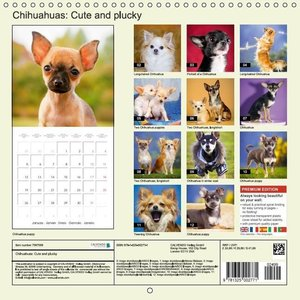 Chihuahuas: Cute and Plucky