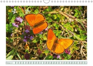Schmetterlinge: Traumtänzer der Natur