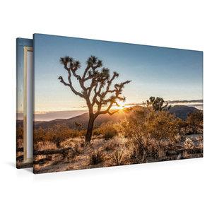 Premium Textil-Leinwand 120 cm x 80 cm quer Joshua Tree National