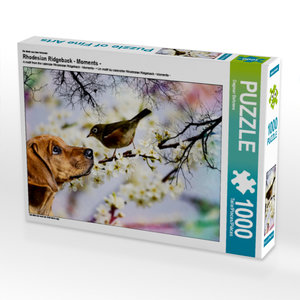 CALVENDO Puzzle Rhodesian Ridgeback - Moments - 1000 Teile Lege-