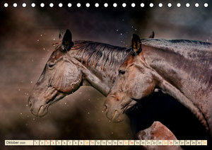 Eleganz und Schönheit - Pferde