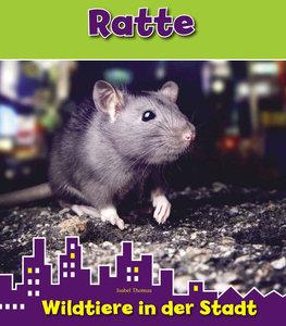 Ratte. Wildtiere in der Stadt