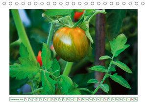 Appetitliche Tomaten - von sonnengelb bis purpurrot (Tischkalend