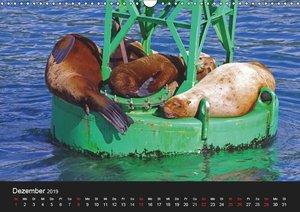 Alaska und Kanadas Westen (Wandkalender 2019 DIN A3 quer)