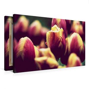 Premium Textil-Leinwand 75 cm x 50 cm quer Ein Bild aus dem Kale