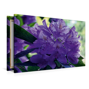 Premium Textil-Leinwand 120 cm x 80 cm quer Lilaner Rhododendron