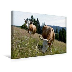 Premium Textil-Leinwand 45 cm x 30 cm quer Milchkühe auf artenre