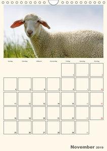 Merinolandschafe / Terminplaner (Wandkalender 2019 DIN A4 hoch)
