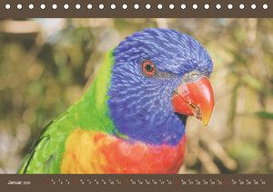 Australiens Tierwelt - Auge in Auge