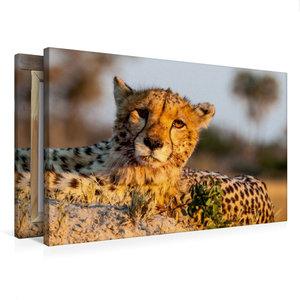 Premium Textil-Leinwand 75 cm x 50 cm quer Gepard