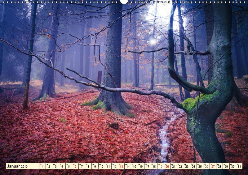 Mystische Wälder - Zauber der Natur (Wandkalender 2019 DIN A2 qu - zum Schließen ins Bild klicken