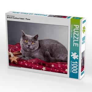 Ein Motiv aus dem Kalender Britisch Kurzhaar Katzen - Planer 100