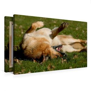Premium Textil-Leinwand 75 cm x 50 cm quer Hundefreuden