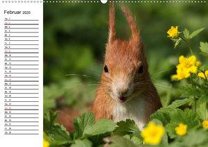 Mit dem Eichhörnchen durchs Jahr (Wandkalender 2020 DIN A2 quer)
