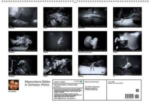 Meerestiere Bilder in Schwarz Weiss (Wandkalender 2019 DIN A2 qu