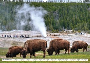 TATONKA Der nordamerikanische Bison