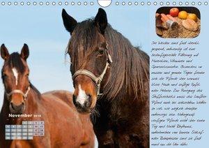 Pferdehaltung Tipps und Wissenswertes