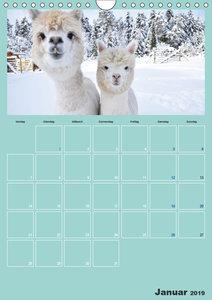 Alpakas zum Verlieben (Wandkalender 2019 DIN A4 hoch)