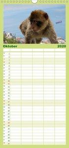 Tarifa - Andalusien - Familienplaner hoch (Wandkalender 2020 , 2