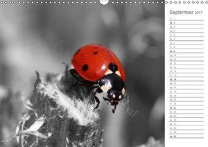 Schwarzweißes Farbenspiel / Geburtstagskalender