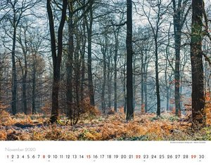 Bäume-Wälder 2020 Großformat-Kalender 58 x 45,5 cm